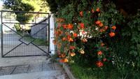 Senani flower garden -